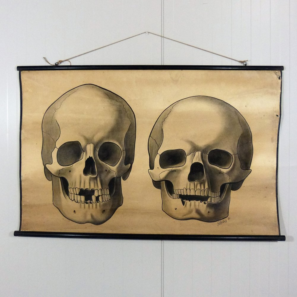 Rare anatomical school image of 2 skulls by G. Helbig, Germany 1920-30
