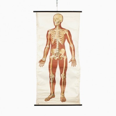 Poster - Human Skeleton from the seventies by unknown designer for Deutsche Hygienische Museum Dresden