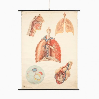 Poster - Lungs from the seventies by unknown designer for Deutsche Hygienische Museum Dresden
