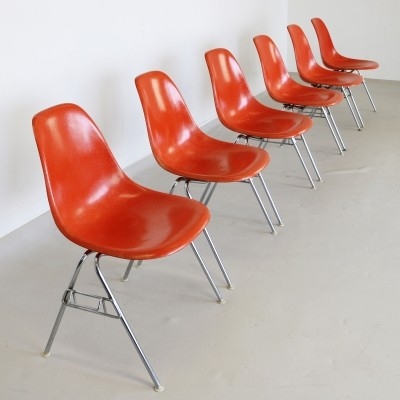 6 x Orange DDS dinner chair by Charles & Ray Eames for Fehlbaum for Herman Miller, 1960s