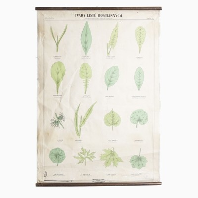 Vintage School Poster with Leaves, 1950s