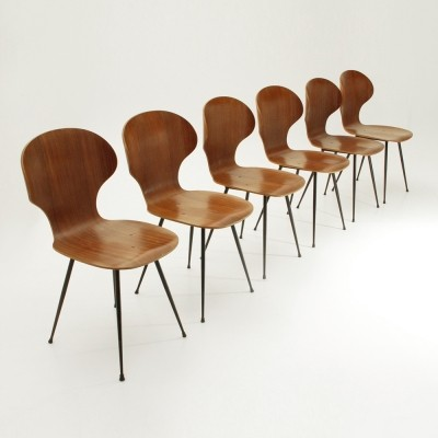 Set of 6 dinner chairs by Carlo Ratti for Industria legni Curvati, 1950s