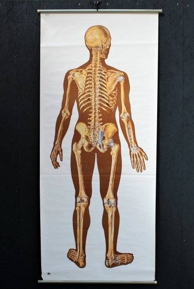Poster of human body, 1980s