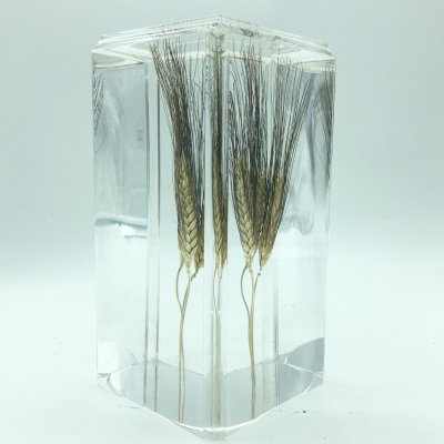 Plexiglass Sculpture with Incorporated Ear of Wheat, 1970